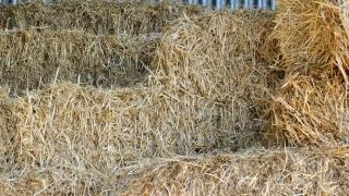Medium square straw bales for mulching or animal bedding